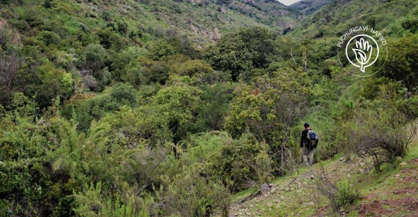 """A través de campaña """"crowdfunding"""" buscan reforestarPuchuncaví"""