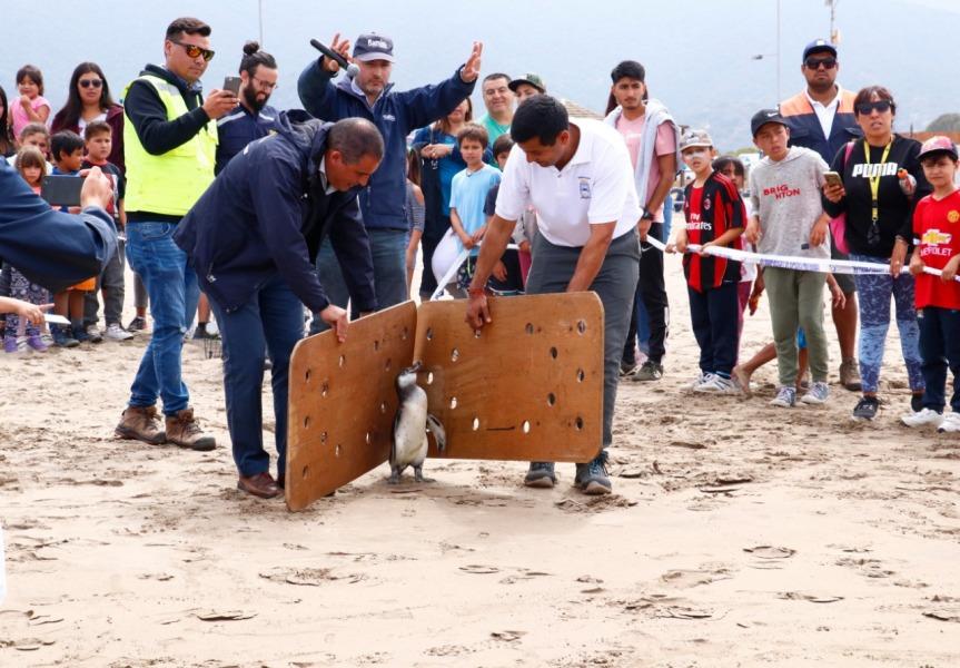 Sernapesca mejora capacidad para atender rescate de fauna marina mediante convenio con FundaciónÑamku