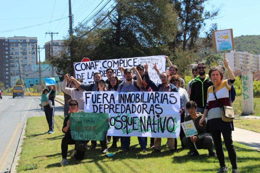 Vecinos y vecinas de Quilpué protestan contra inmobiliarias por destrucción de bosquenativo